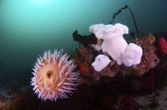 холодная вода рифа Стоковые Фотографии RF