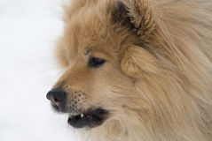 холодная собака Стоковое Изображение RF