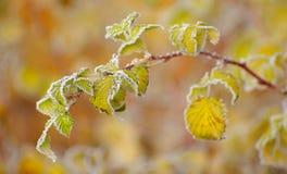 холодная специфическая погода Стоковое фото RF