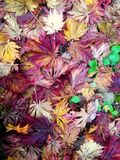 Холст лист Стоковые Фото