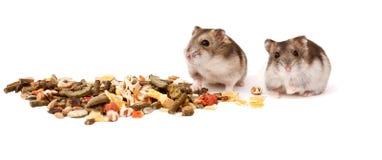 Хомяки на белой предпосылке, хомяки едят сухую еду Стоковое Изображение