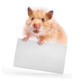 Хомяк держит визитную карточку стоковые фото