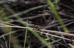 Хоппер 4 травы Стоковое фото RF