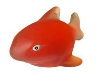 Хорошая красная акула Стоковые Изображения RF