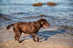 Хорошая смотря собака на пляже Стоковое фото RF