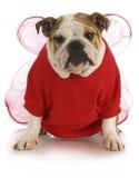 Хорошая собака Стоковые Фотографии RF