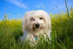 Хорошая собака Стоковые Фото