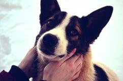 Хорошая shaggy собака Стоковые Фото