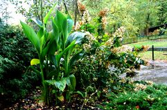 Хорошее смешивание зеленого растения Стоковые Изображения