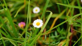Хороший естественный небольшой цветок стоковое изображение