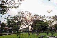 Хороший парк взгляда Стоковые Изображения