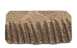 Ископаемый папоротник Polymorphopteris стоковое фото rf