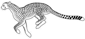 ход гепарда Стоковые Изображения