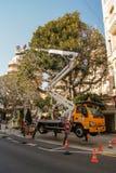 Холить высоких деревьев Стоковые Фотографии RF