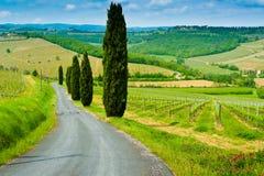 Холмы и кипарисы виноградника Стоковые Изображения