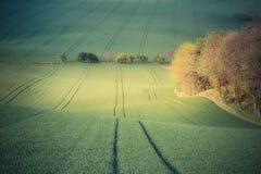 Холмы и поля зеленой травы Стоковое фото RF