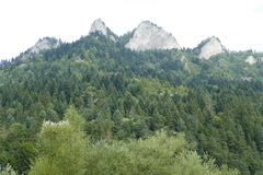Холмы и пуща Стоковые Изображения RF