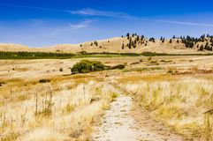 Холмы и след злаковика Стоковое Фото