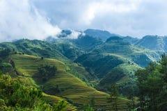 Холмы полей риса террасных и горы в облаках Стоковое Фото