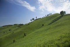Холмы с травой и деревьями Стоковое фото RF