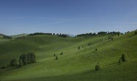 Холмы с травой и деревьями Стоковая Фотография RF