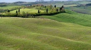 холмы тосканские Стоковые Изображения RF