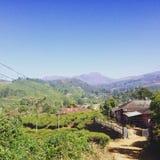 Холмы чая Munnar Стоковое фото RF
