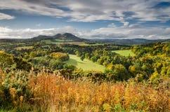 Холмы Eildon в осени Стоковые Фото