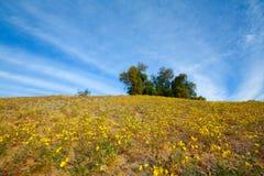 Холм желтых цветков Стоковые Изображения