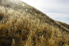 Холм зерна Стоковое фото RF