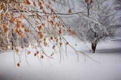 Холм зимы Стоковая Фотография RF
