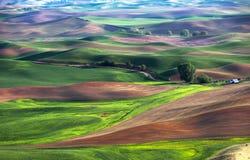 Холм и сельскохозяйственное угодье завальцовки Стоковое Фото