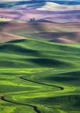 Холм и сельскохозяйственное угодье завальцовки Стоковое Изображение RF