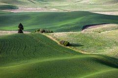 Холм и сельскохозяйственное угодье завальцовки Стоковая Фотография RF