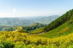 Холм мексиканского солнцецвета с горным видом Стоковая Фотография