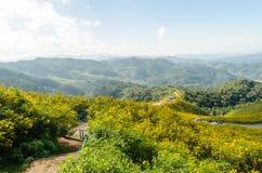 Холм мексиканского солнцецвета с горным видом Стоковые Изображения RF