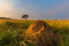 Холм муравья и дерево Стоковое Фото