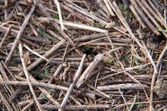 Холм муравья как макрос конца-вверх предпосылки в поле стоковое фото rf