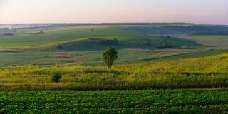 Холм, поля и сиротливое дерево Стоковые Фото