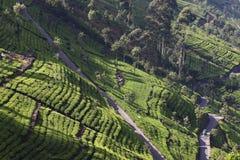 Холм плантации чая стоковое фото