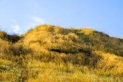 Холм с желтой травой Стоковые Изображения