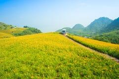 Холм цветка Daylily Стоковое Изображение RF