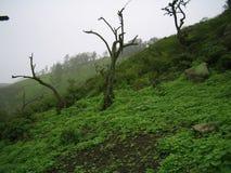 холм Стоковые Фотографии RF