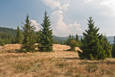 Холм Bukowina Wakzmundzka в горах Gorce Стоковое Изображение RF