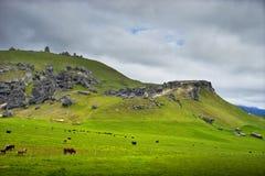 Холм Castel, Новая Зеландия Стоковая Фотография RF
