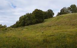 Холм Polenovo Стоковое фото RF