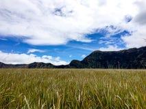 Холм Savana вокруг горы Bromo Стоковая Фотография RF