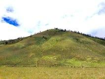 Холм Savana вокруг горы Bromo Стоковая Фотография