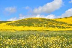 Холм Wildflower Стоковое Изображение