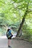 Ходок в середине пути в лесе Стоковые Изображения